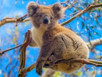 Fly-drive Wandelen door avontuurlijk Australië